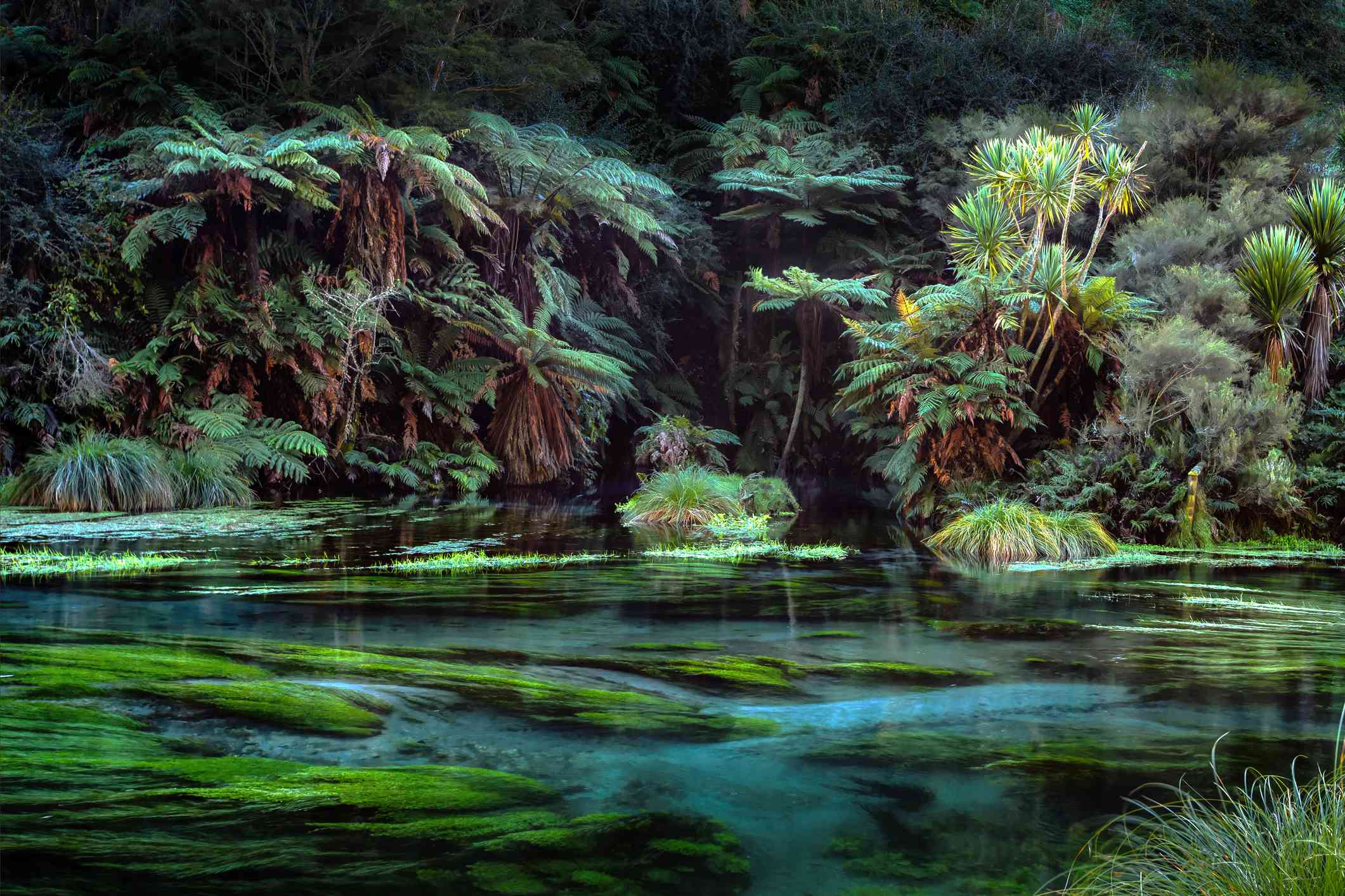 fern and palm trees and cold spring waters