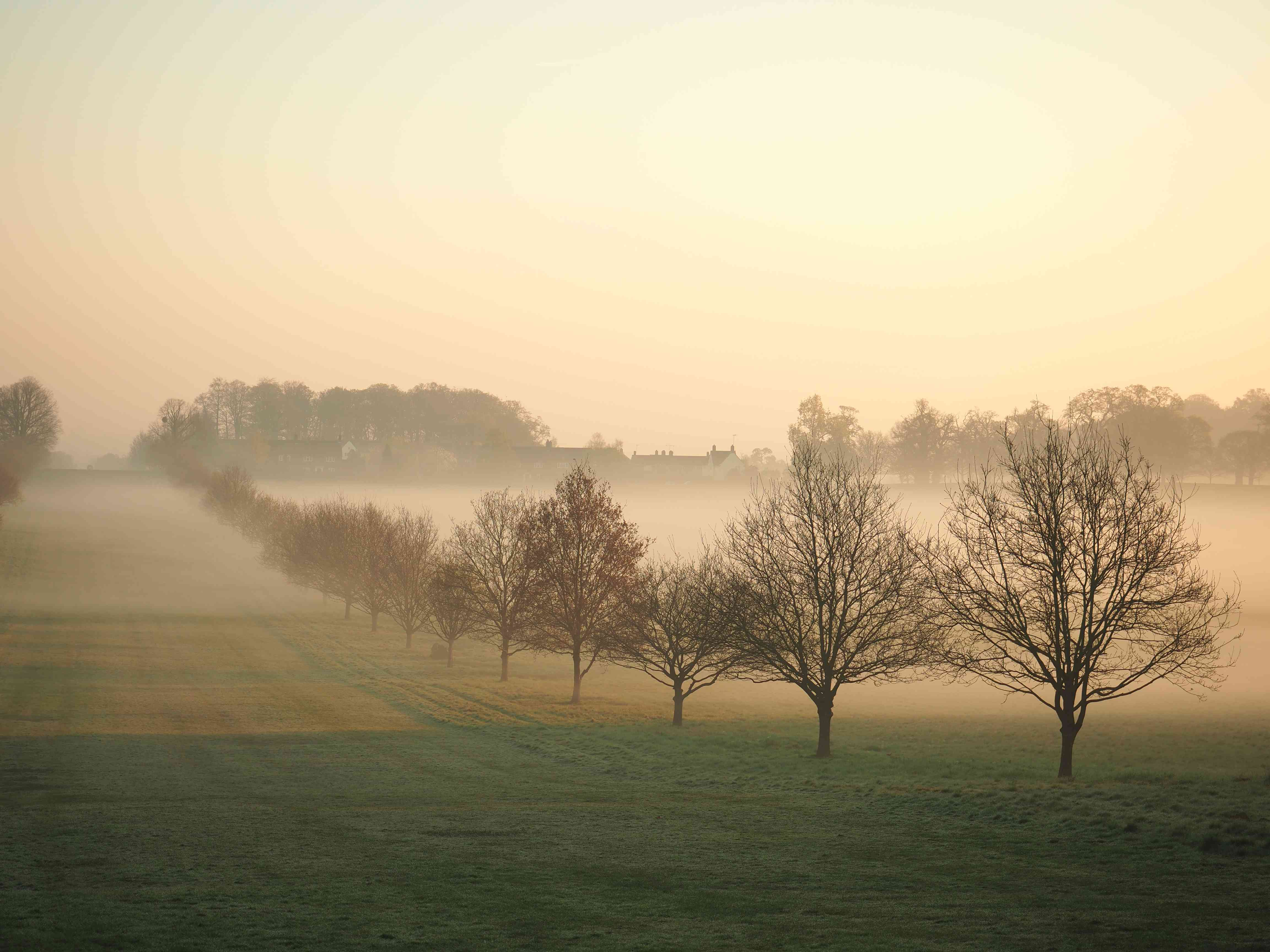 Bare trees covered with morning mist in Windsor Great Park