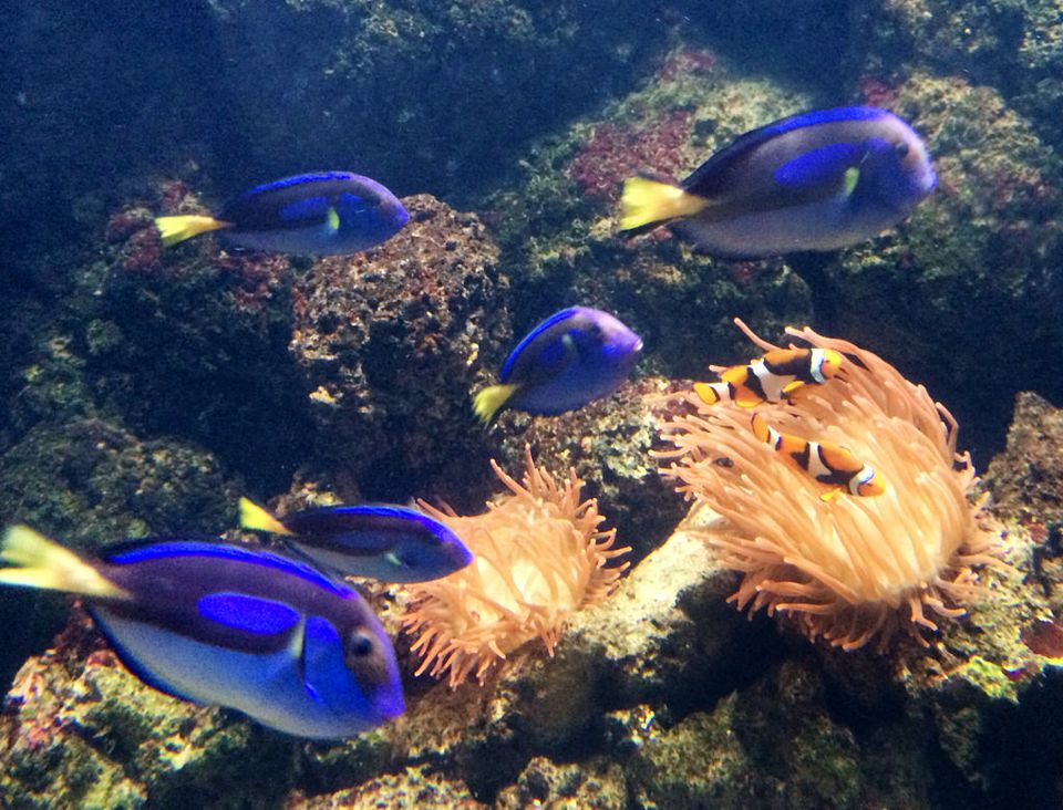 Sea Life London Aquarium Visitor Information And Review