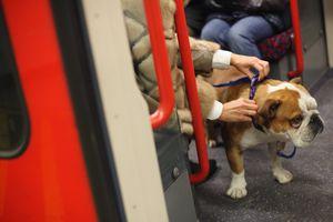 Bulldog on London Underground