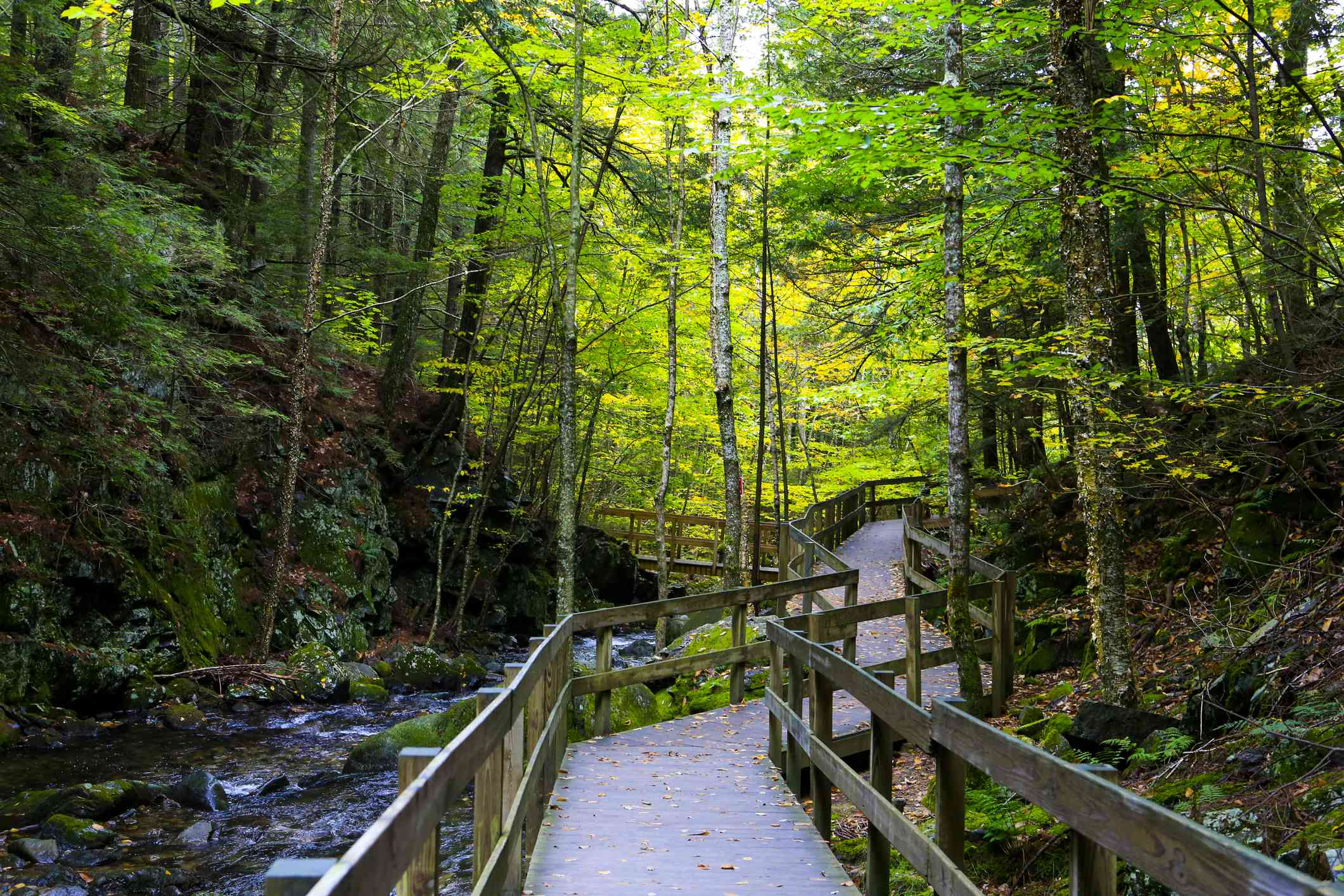 wooden path over a stream in a forest