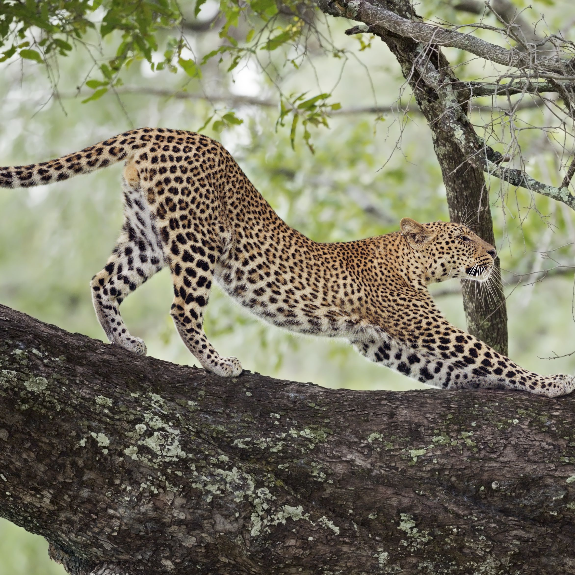 The Top 5 Places To See Leopards In Africa