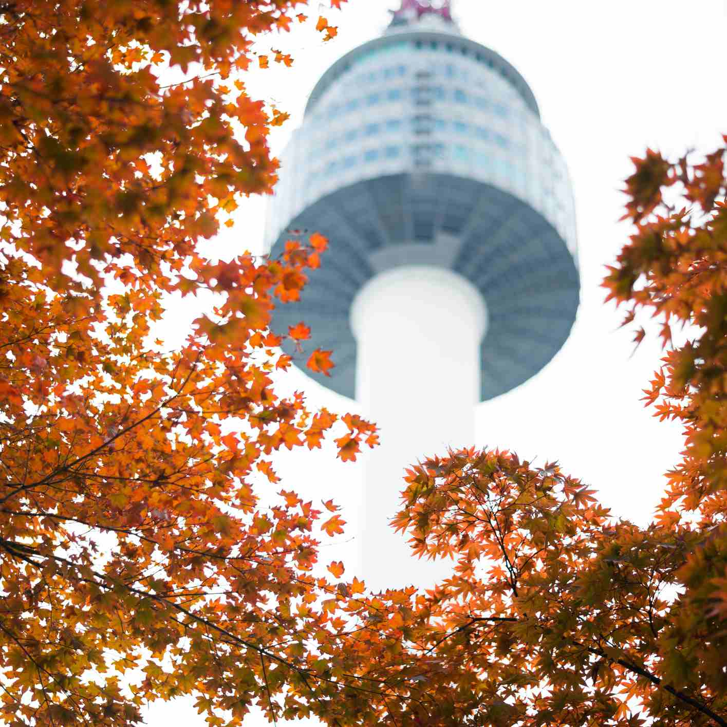 Red maple leaves with N Seoul tower in background