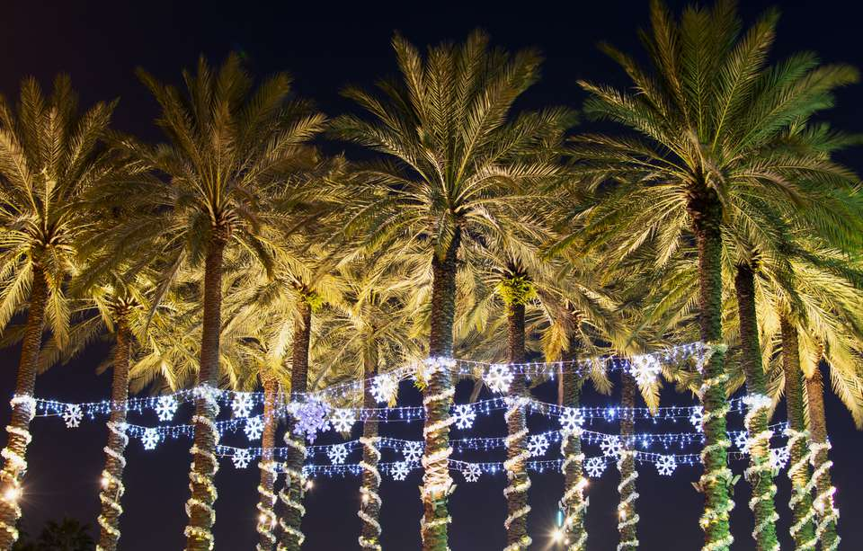 Palm Holiday Lights in Tampa