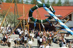 View of people raising a maypole, Unterbrunn, Starnberg District, Upper Bavaria, Germany