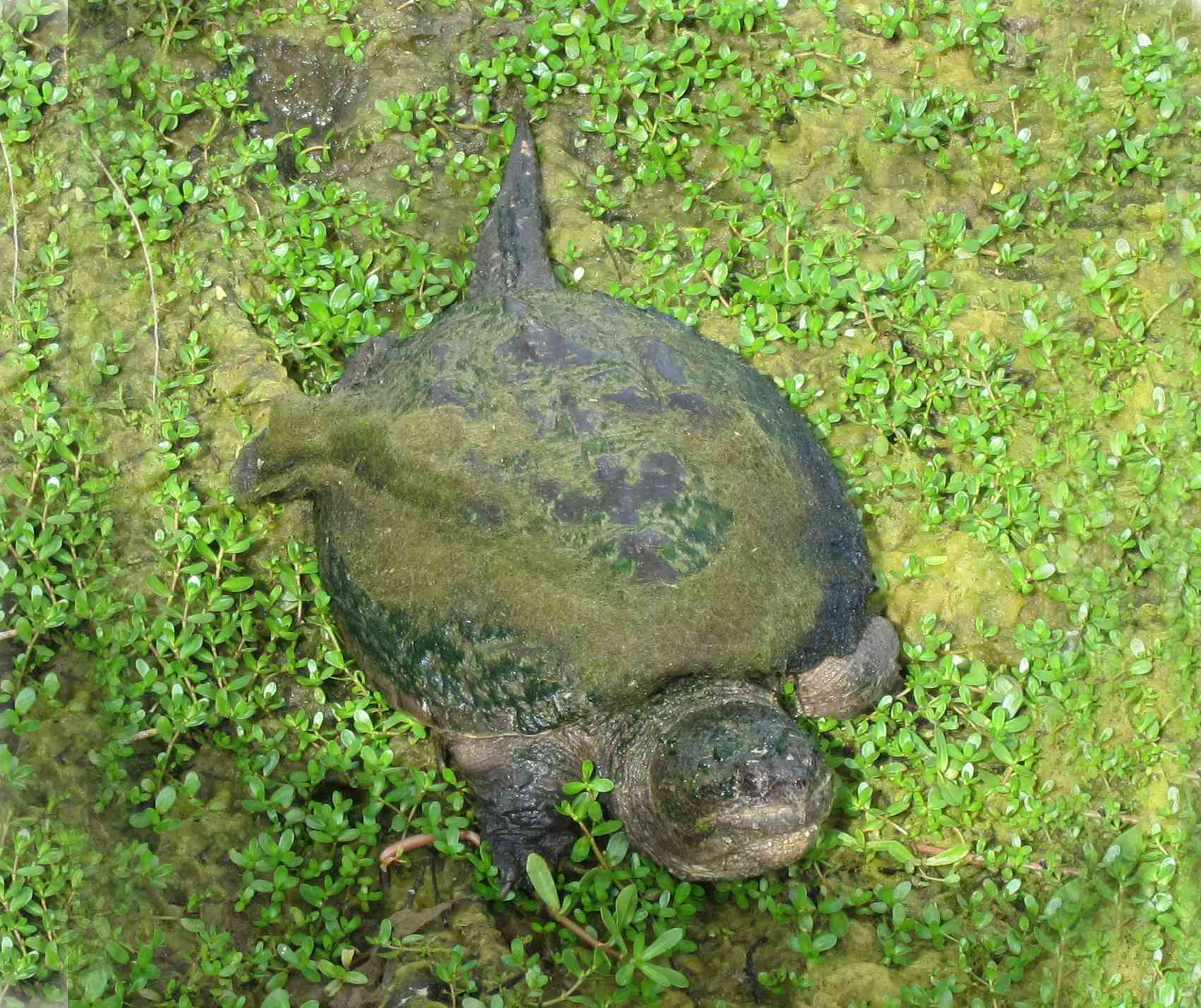 Turtle at Seacenter
