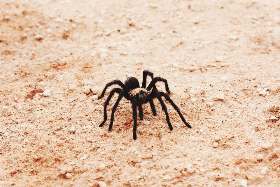 Primer plano de la araña en el campo