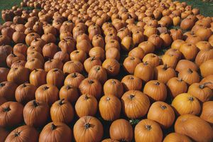 High angle view of a heap of pumpkins, Detroit, Michigan, USA