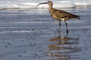 Bird on the Beach at Point Reyes