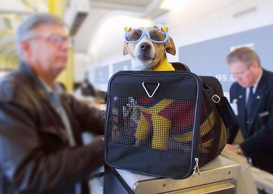 Dog at the Airport