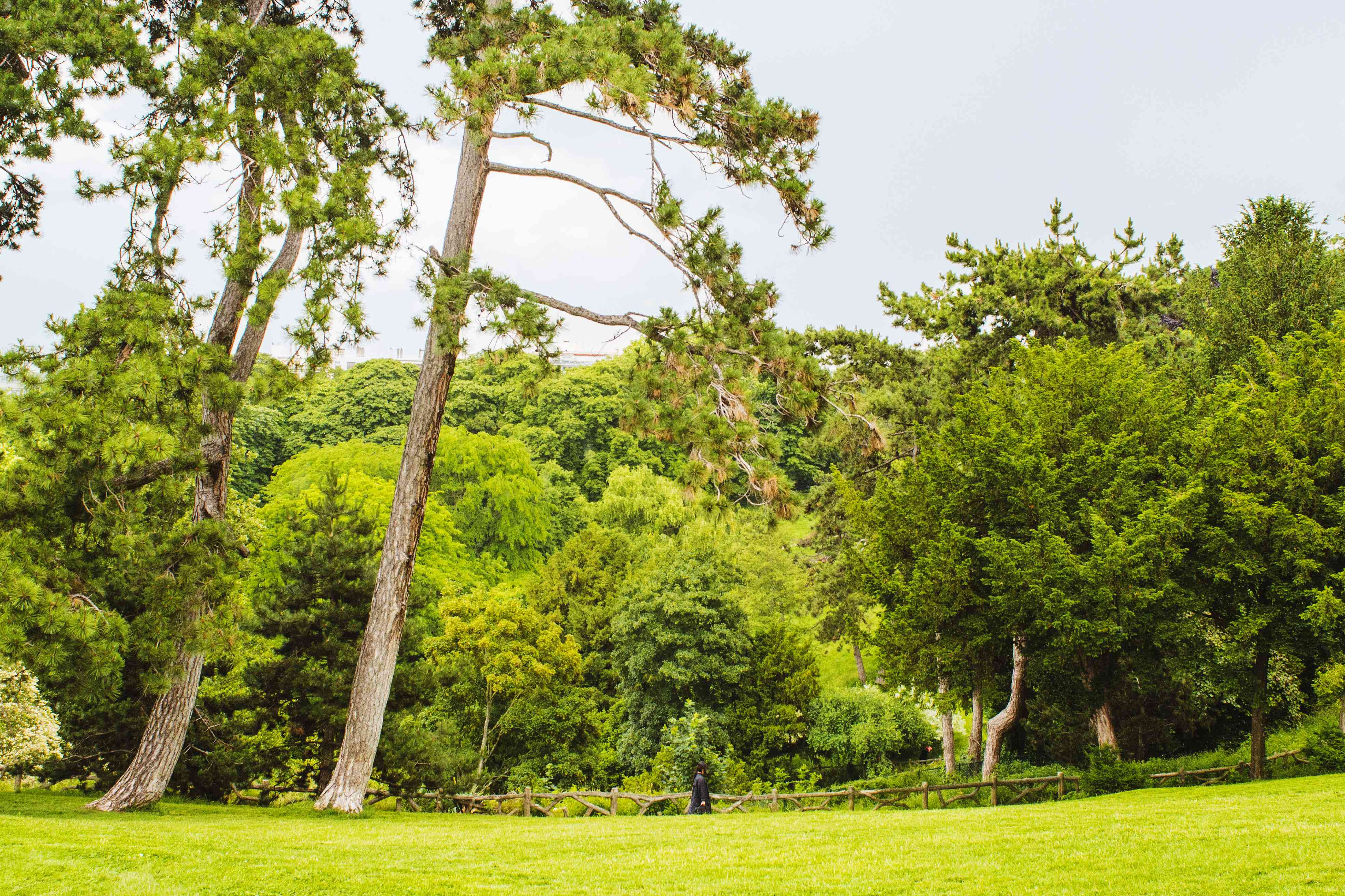 Man walking through greenery in Parc des Buttes Chaumont