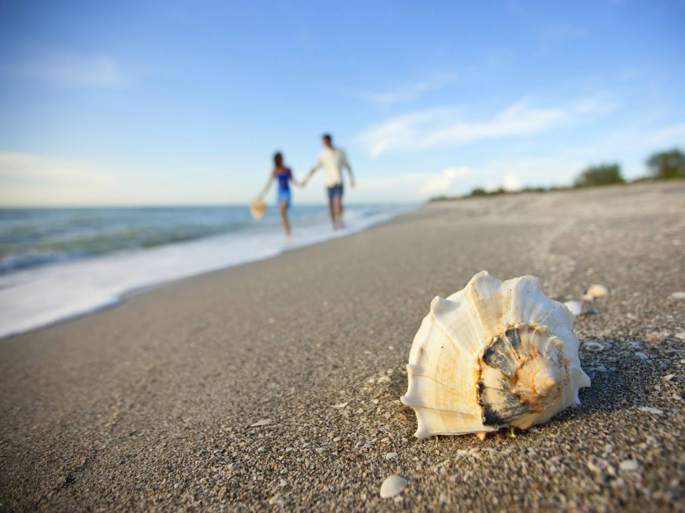 Close up of Sanibel seashell