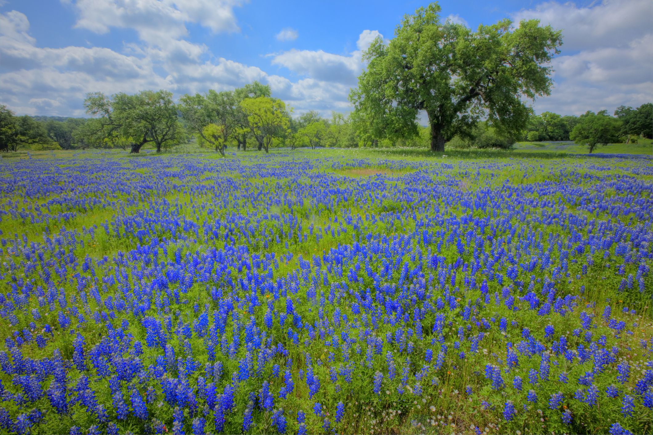 How to Find Wildflowers in the Texas Hill Country
