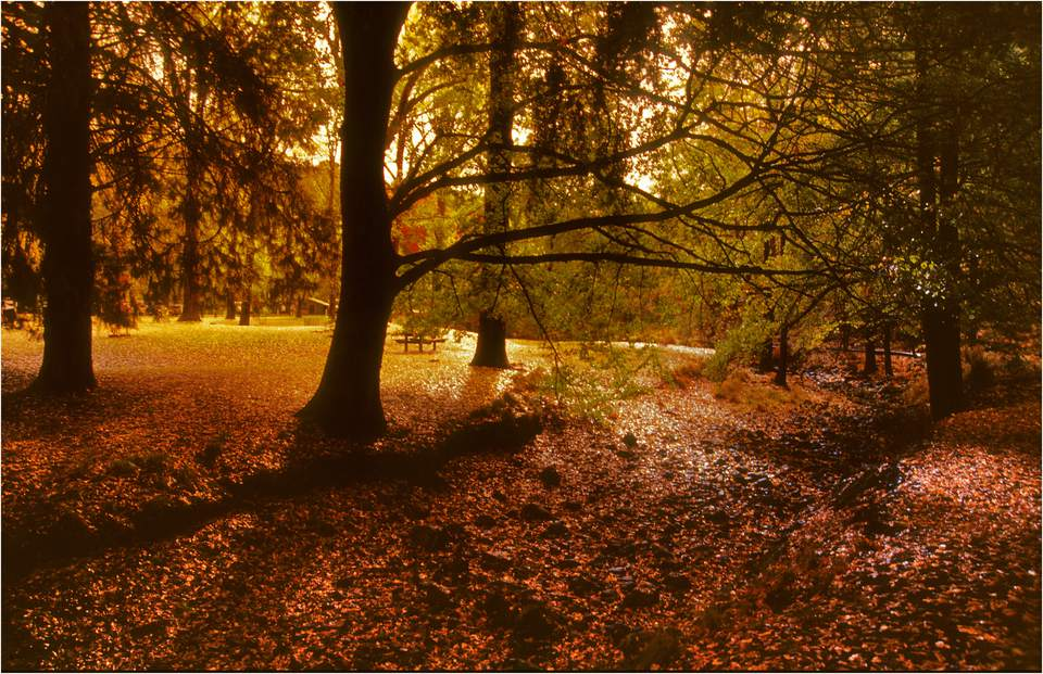 Autumn in Buchan, East Gippsland, Victoria, Australia.