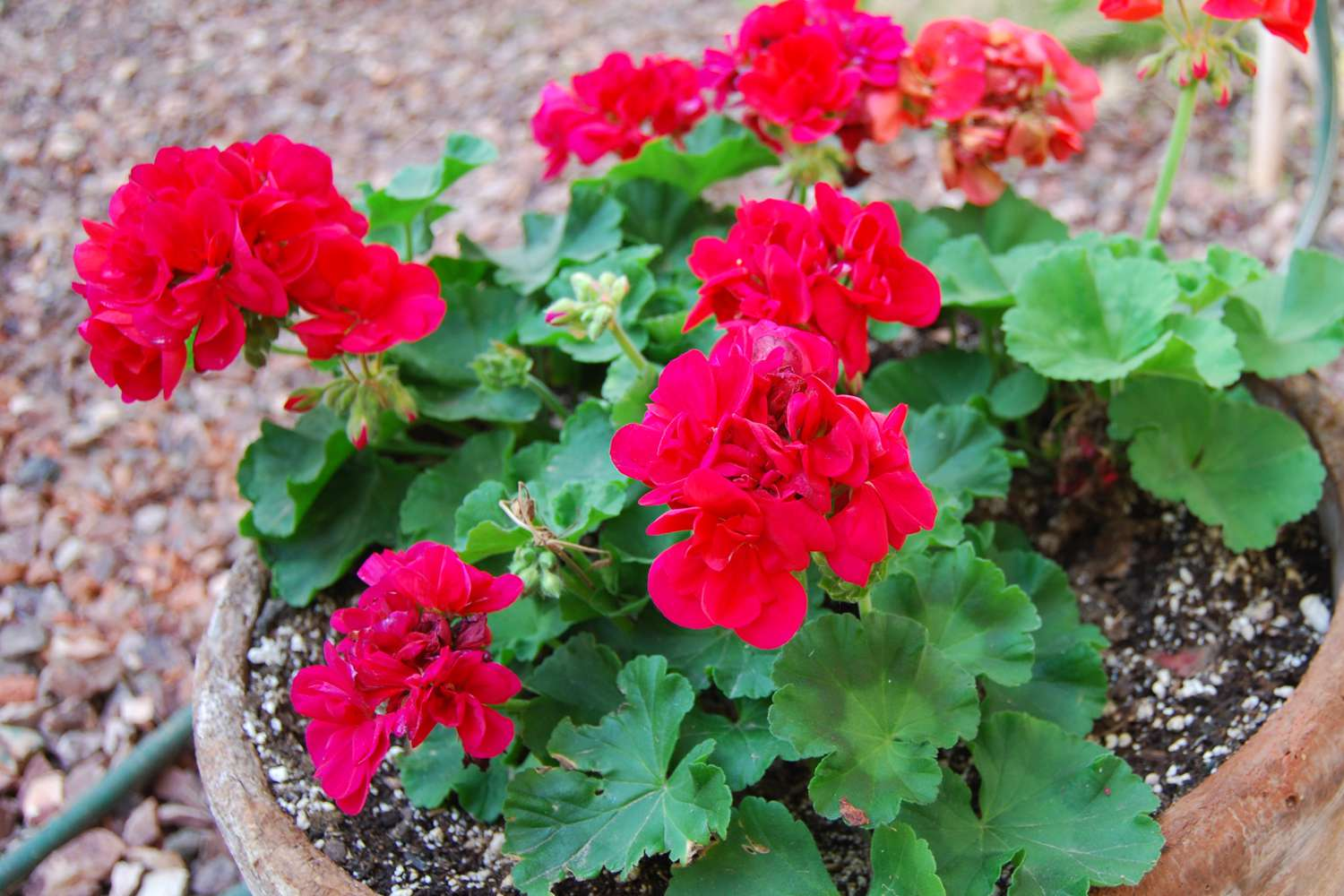 Keep Your Desert Garden Healthy With These Monthly Tips