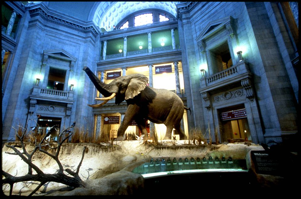 National Museum of Natural History elephant exhibit