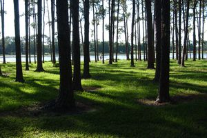 A view of a body of water through a stand of trees