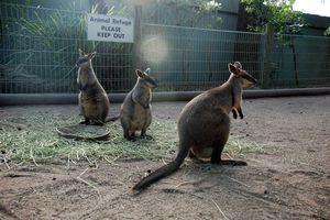 Animals at Featherdale Wildlife Park