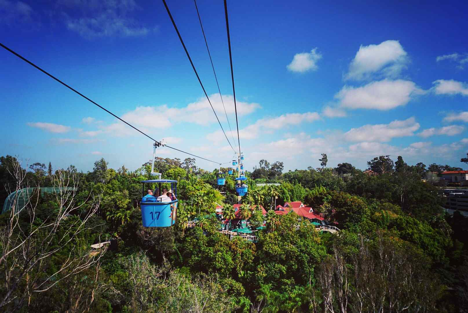 Overhead Cable Cars at the San Diego Zoo