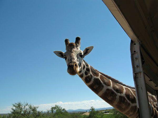 Parque de vida salvaje fuera de África