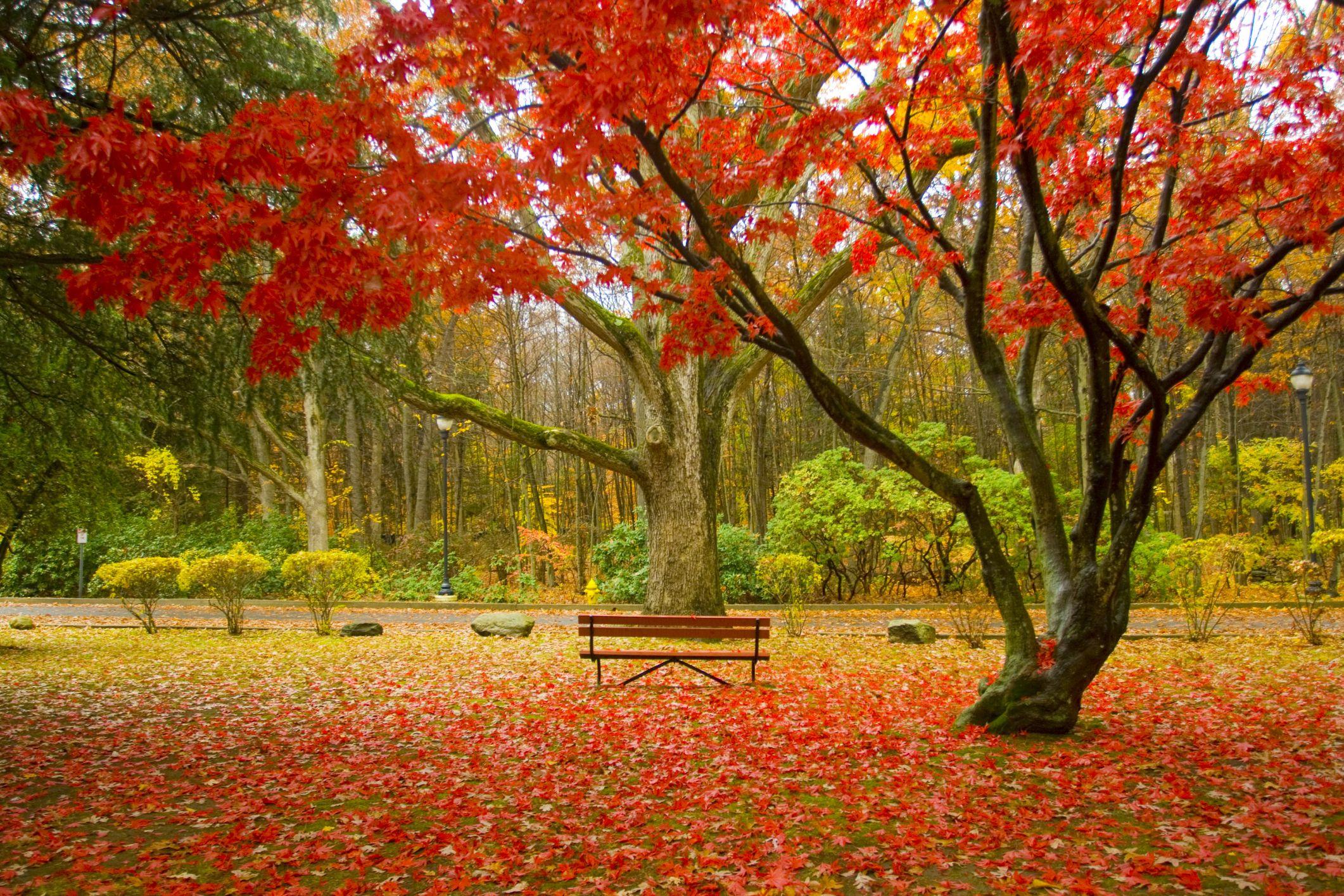 Fall Foliage 2019 New England New England Fall Foliage Central 2019 | A Travel Guide