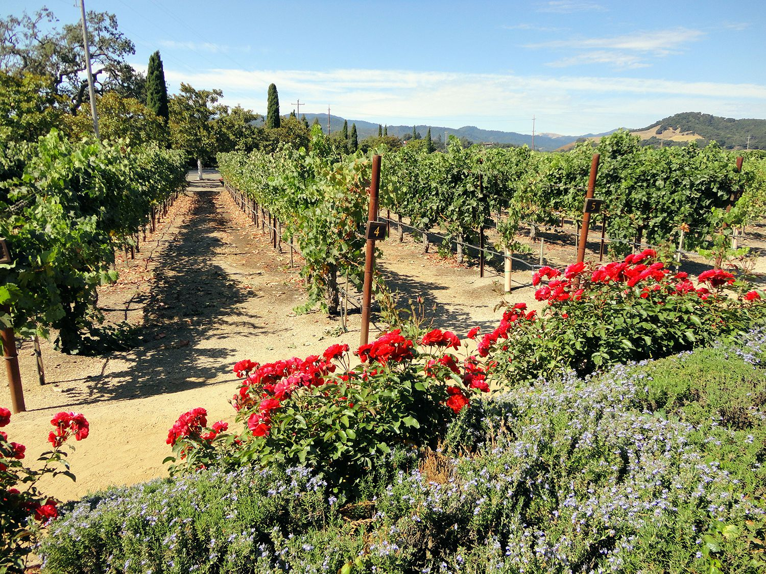 Wineries from Napa Valley