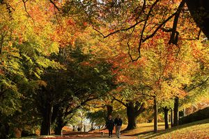 Fall colors appear in mid to late September