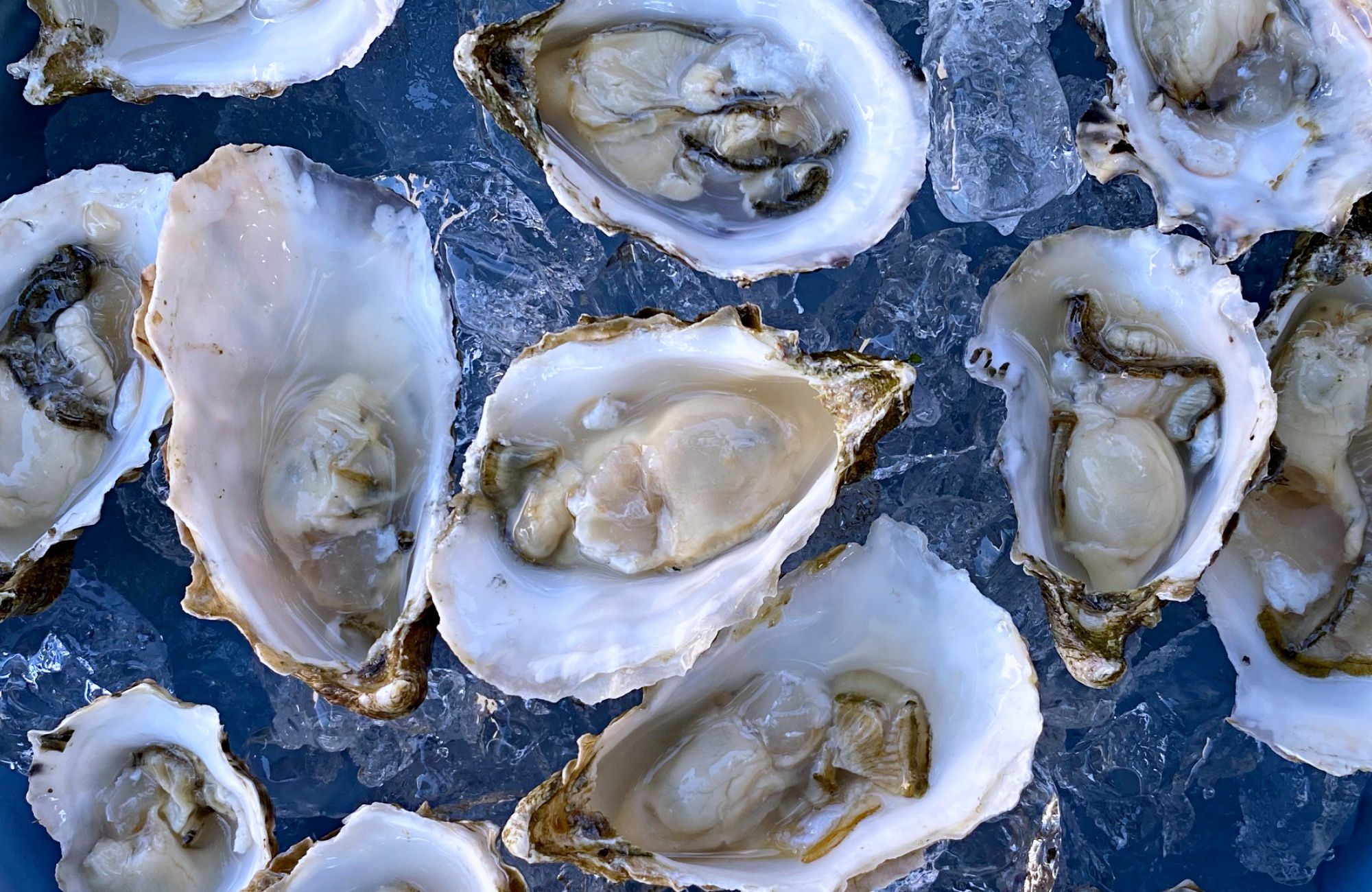 California's Oyster Farms Offer a Unique Kind of Culinary Ecotourism