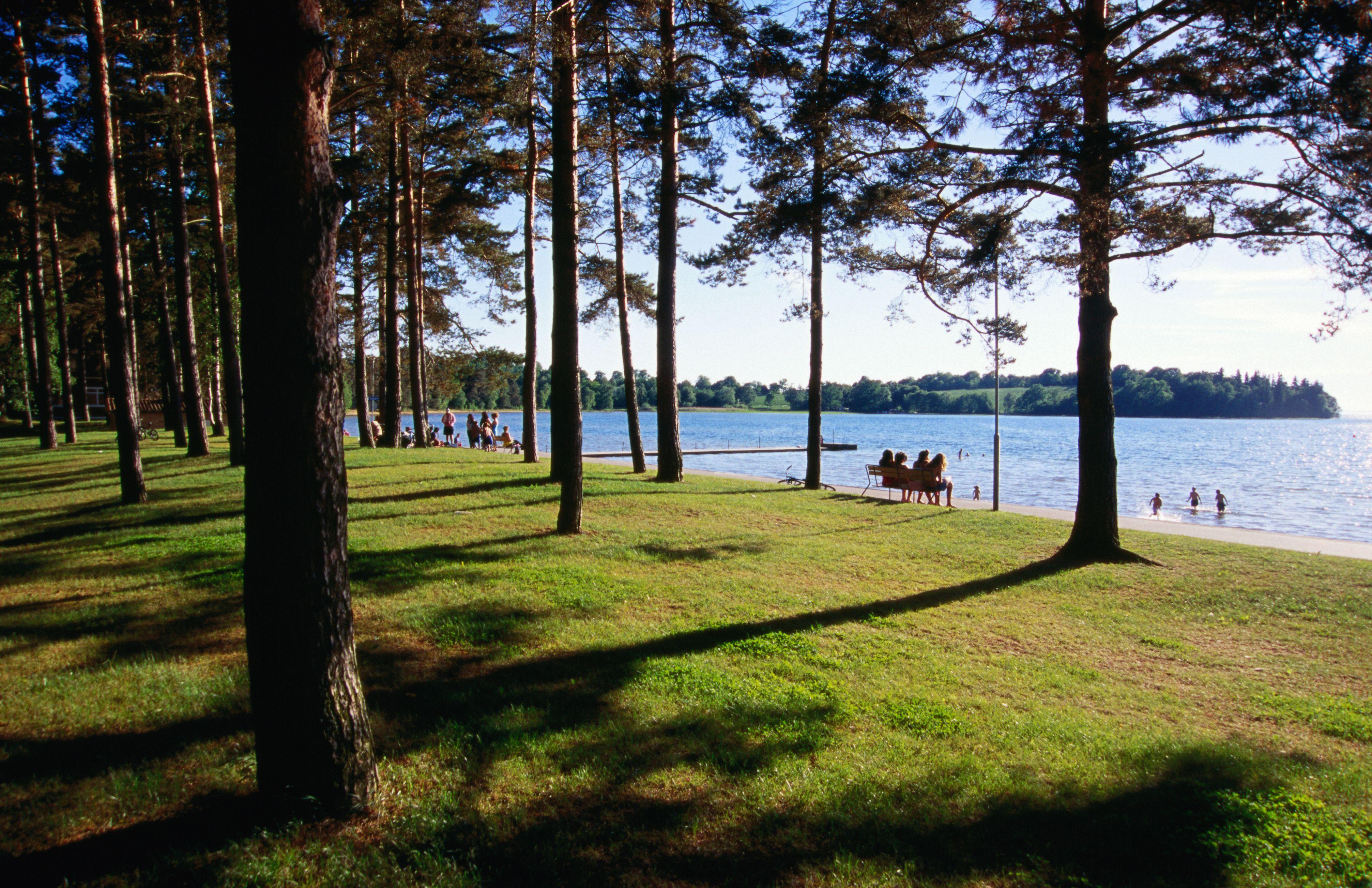 Pine forest lining Sweden's longest lake beach at Varamon, Lake Vattern