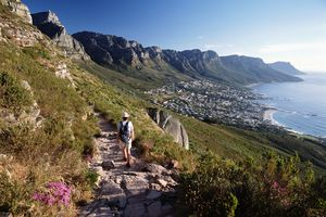 Walker Going Down Path From The Lions Head Looking Down The Coast To Camps Bay And The 12 Apostles