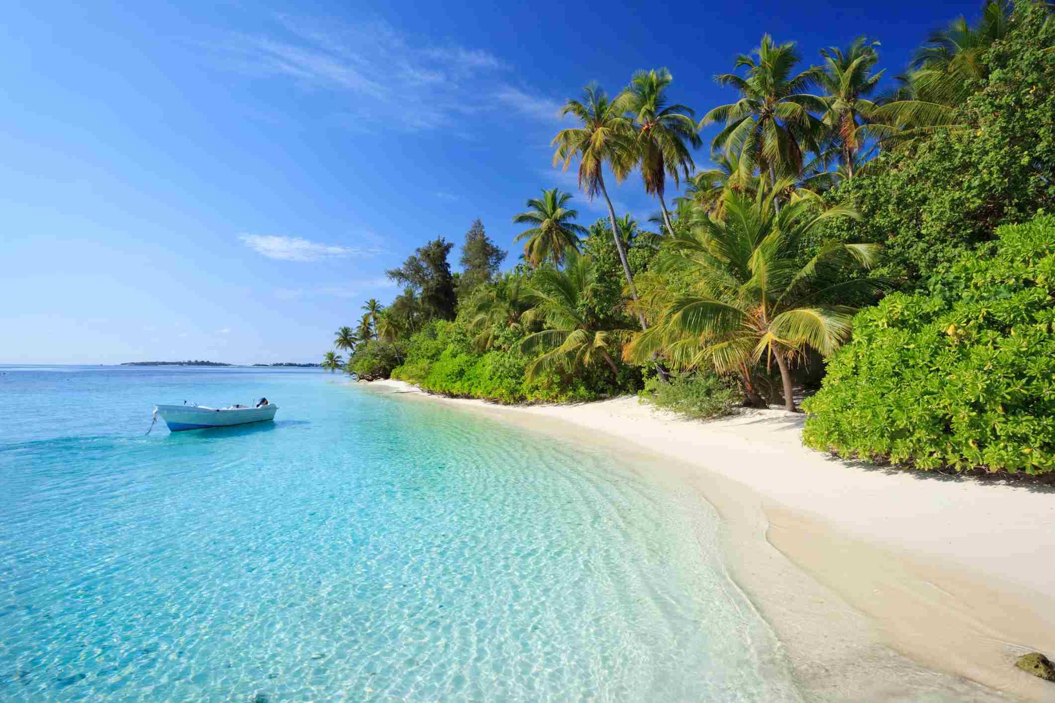 Playa tropical con cocoteros, poco después del amanecer. Isla Biyadhoo, atolón Kaafu, Maldivas, Océano Índico