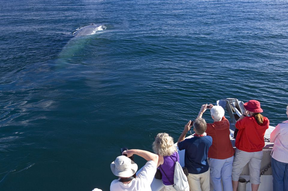 Whale watching of a blue whale in Baja