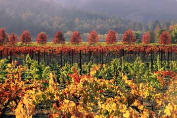 Julian, California: 7 Things to Do When You Visit