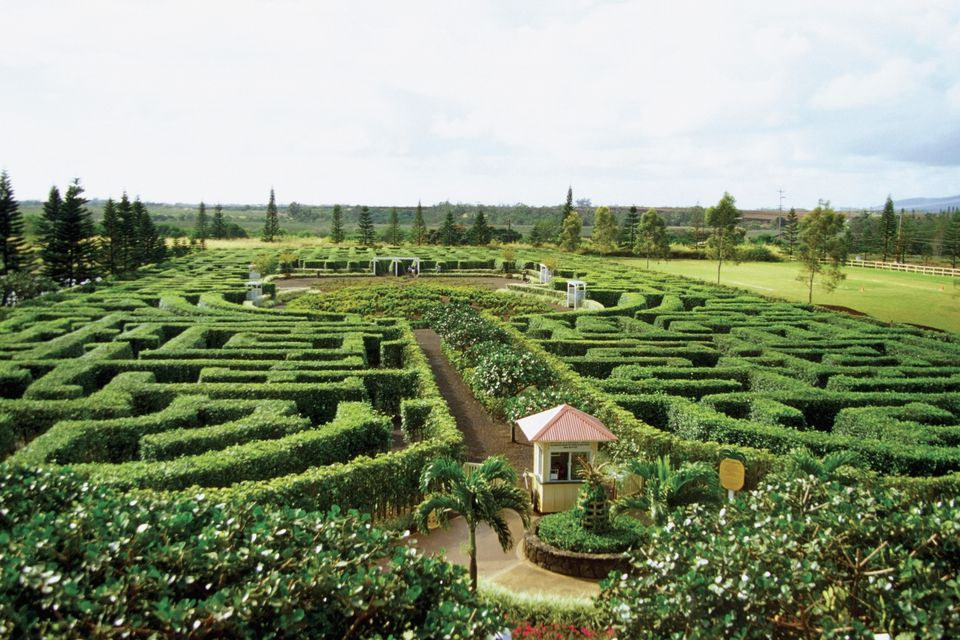 The Dole Plantation Garden Maze