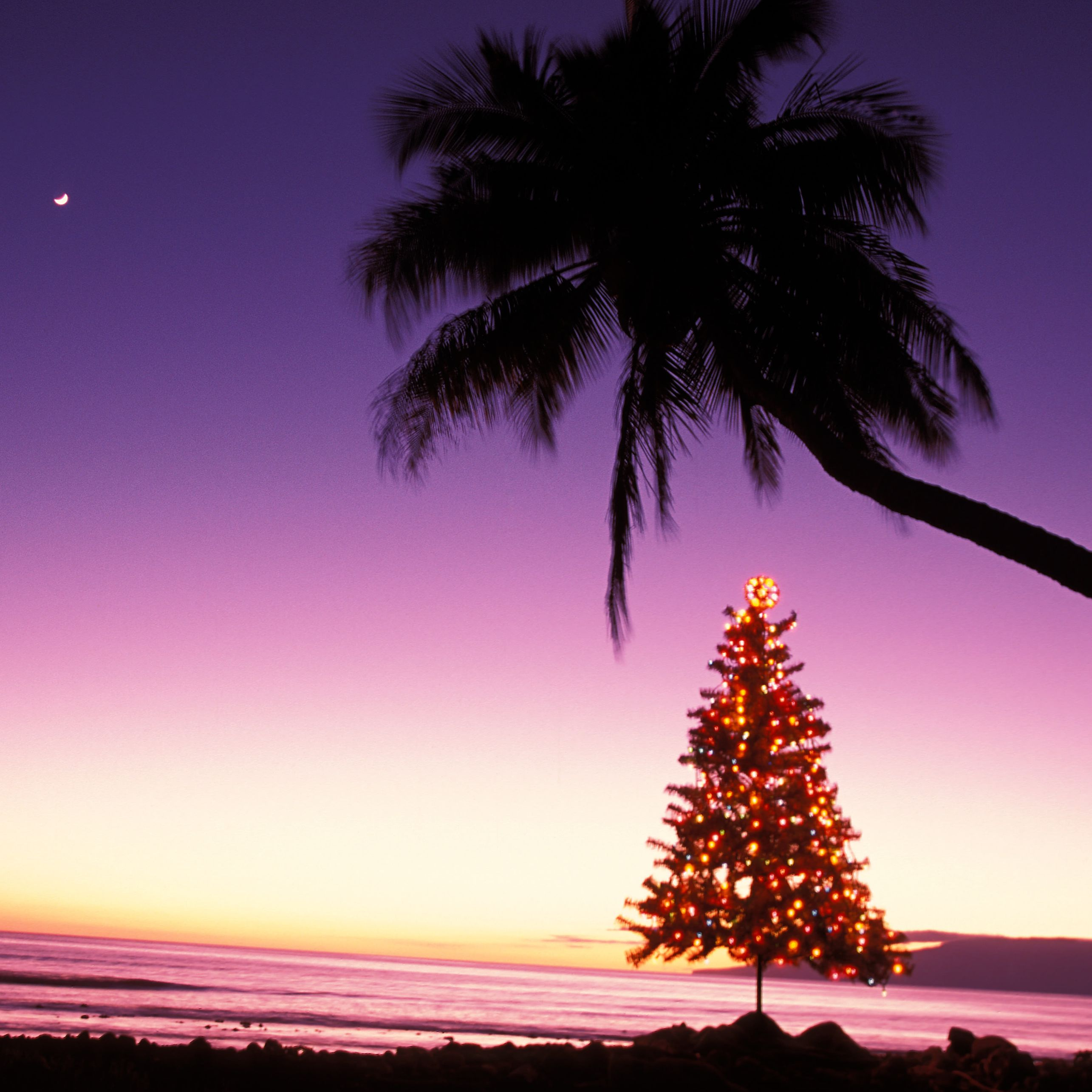 Hawaiian Christmas And New Year S Words And Phrases