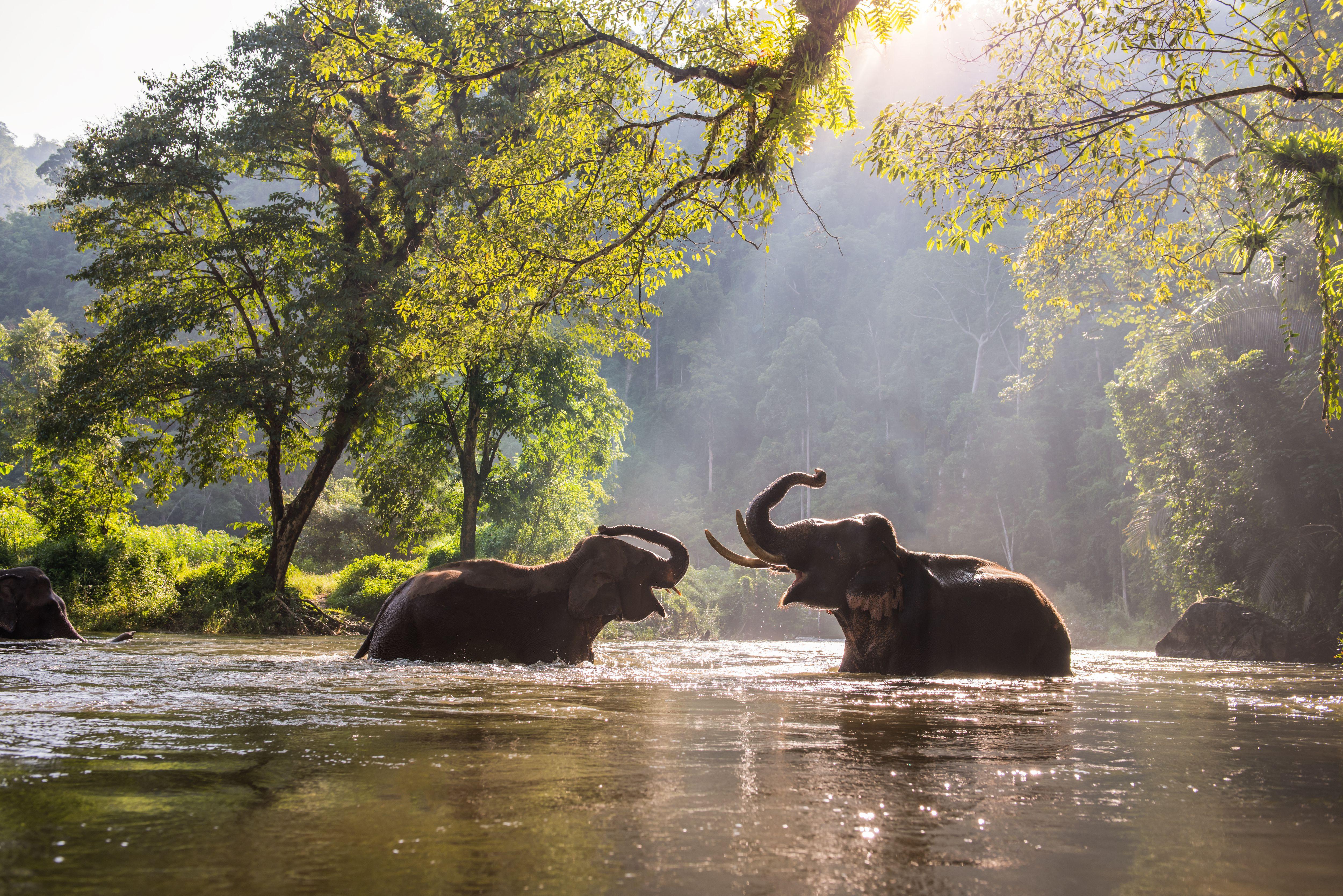 Two elephants bathing in a river near Kanchanaburi, Thailand