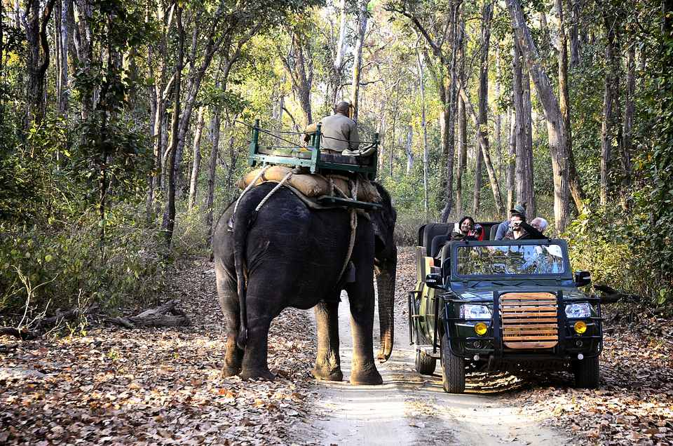 Safari in Kanha National Park.