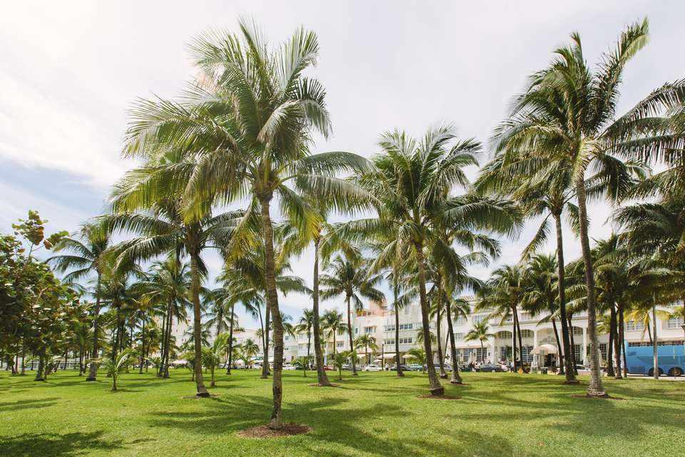 Palm trees in Lummus park in South Beach, Miami, Florida, USA