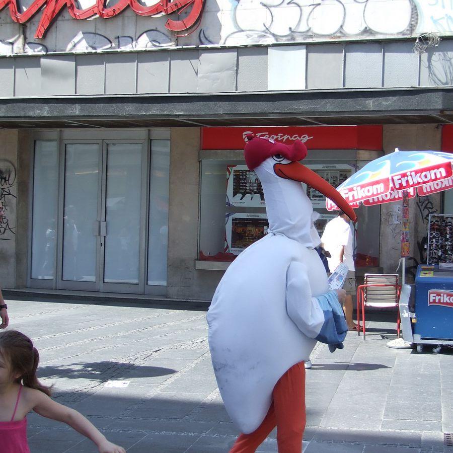Stork in Downtown Belgrade
