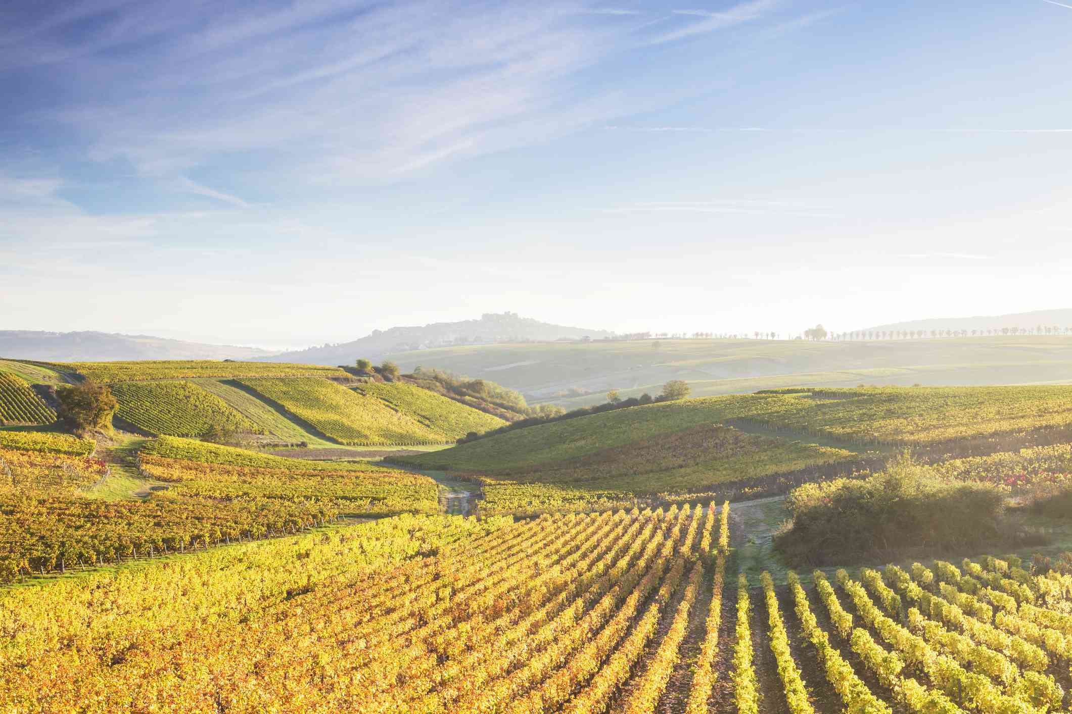The vineyards of Sancerre during autumn in the Loire Valley, France.