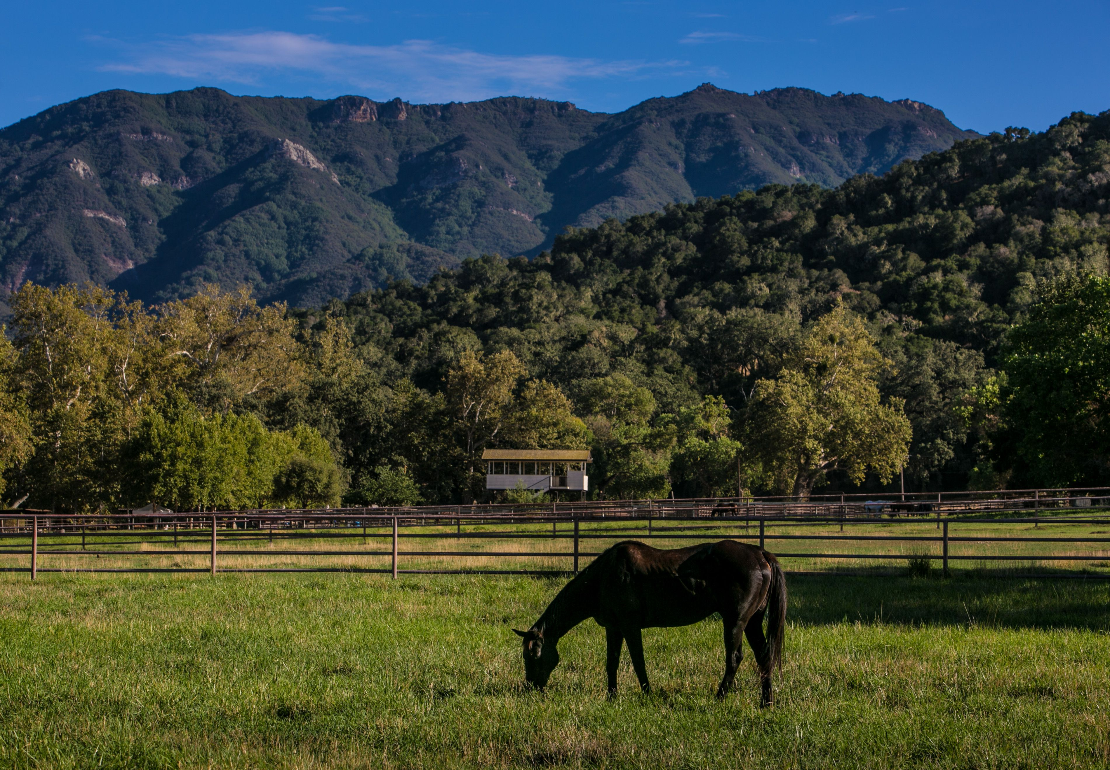 A horse grazes in a pasture at Alisal Guest Ranch in Solvang, California.