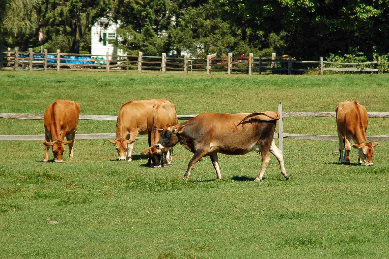 Billings Farm in VT