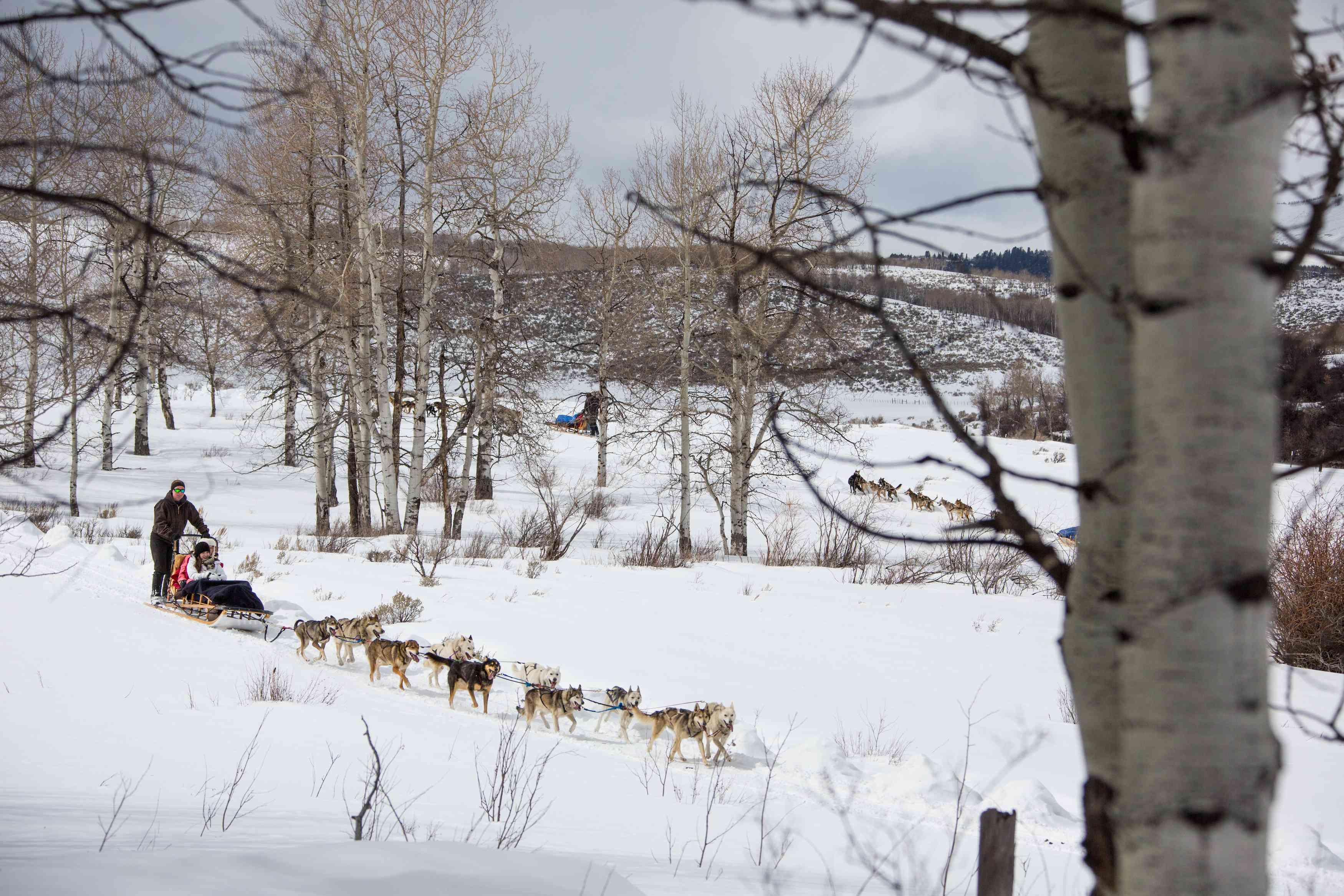 Dog sledding in Colorado