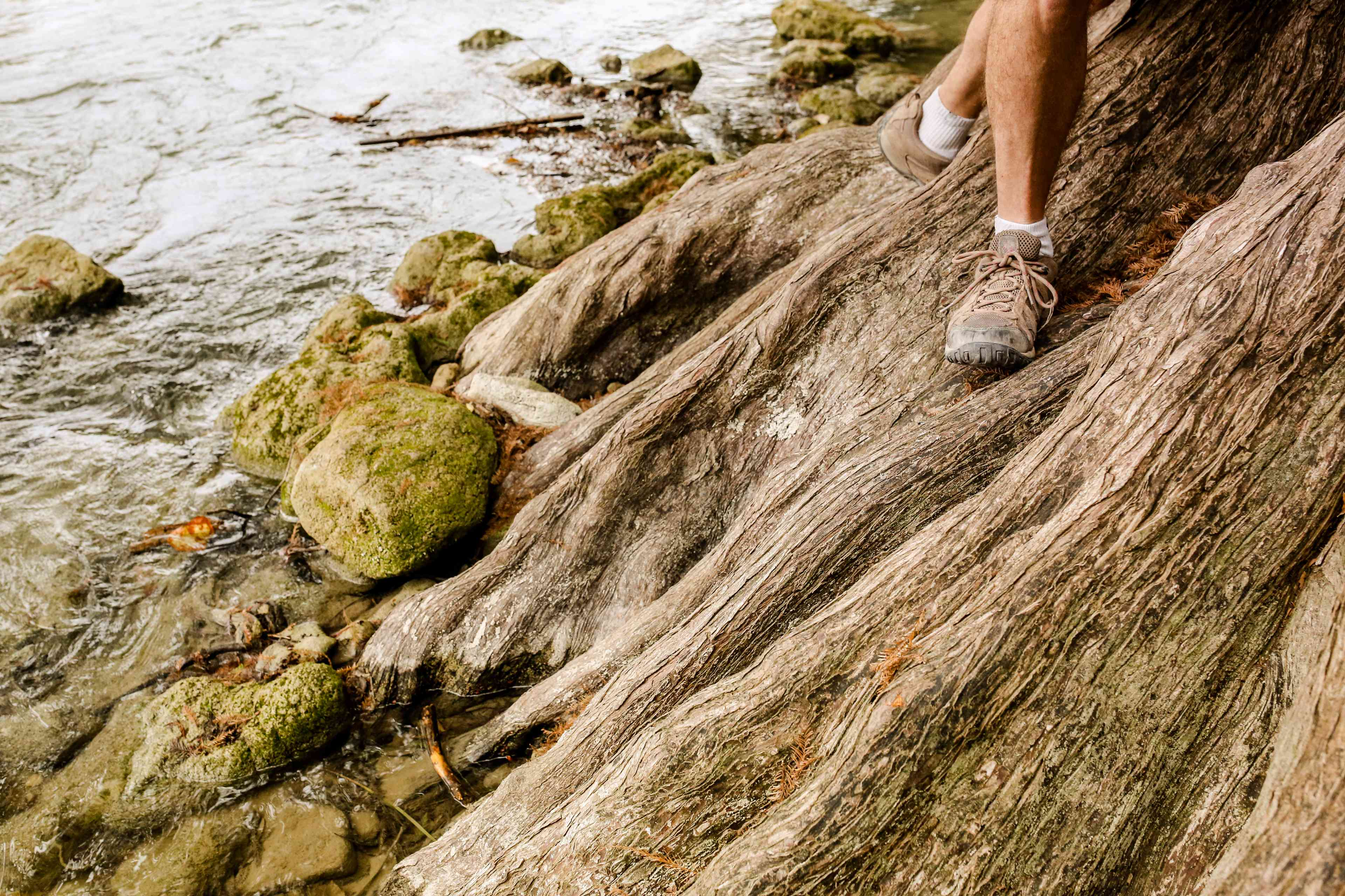 Someone in hiking shoes walking on tree roots at Guadalupe River State Park
