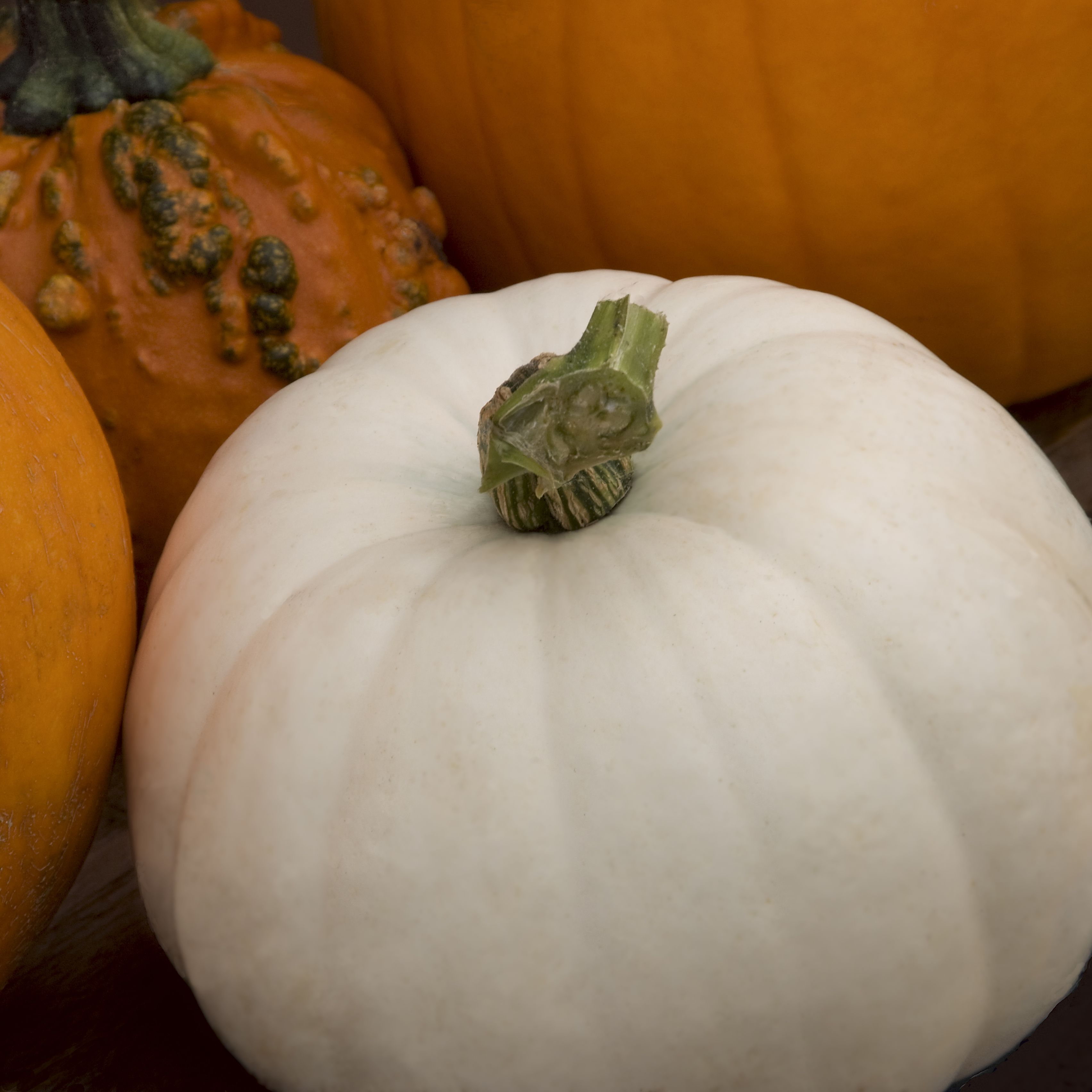 What Is A White Pumpkin And What Can You Do With One