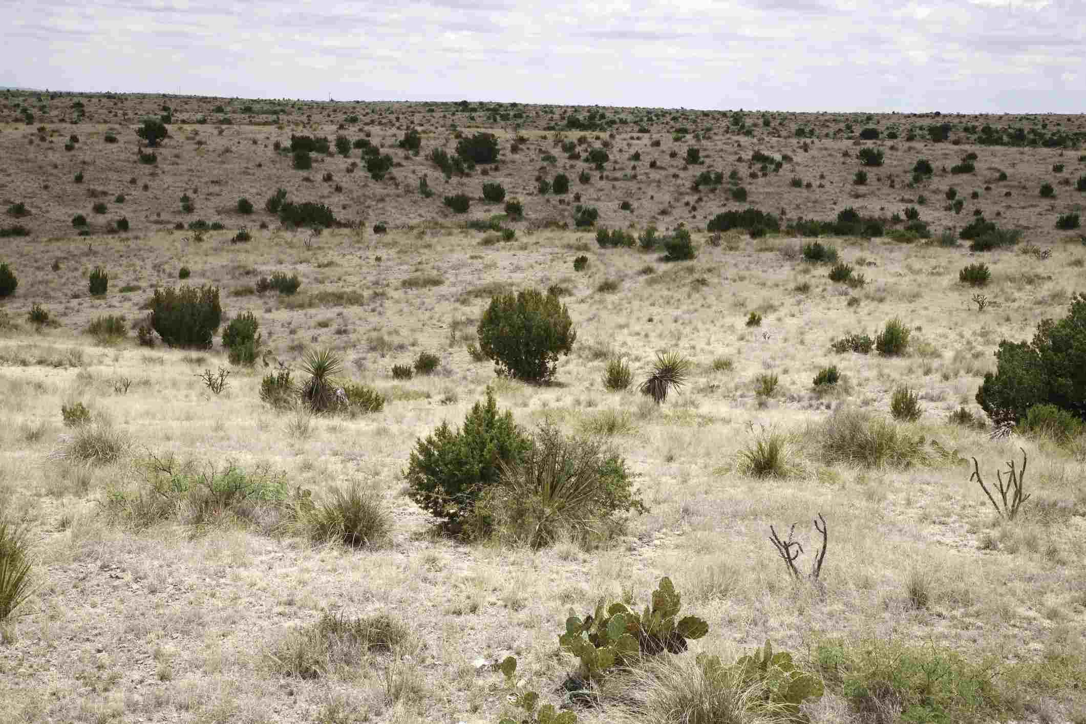 Desert, Del Rio, Val Verde County, Texas, USA