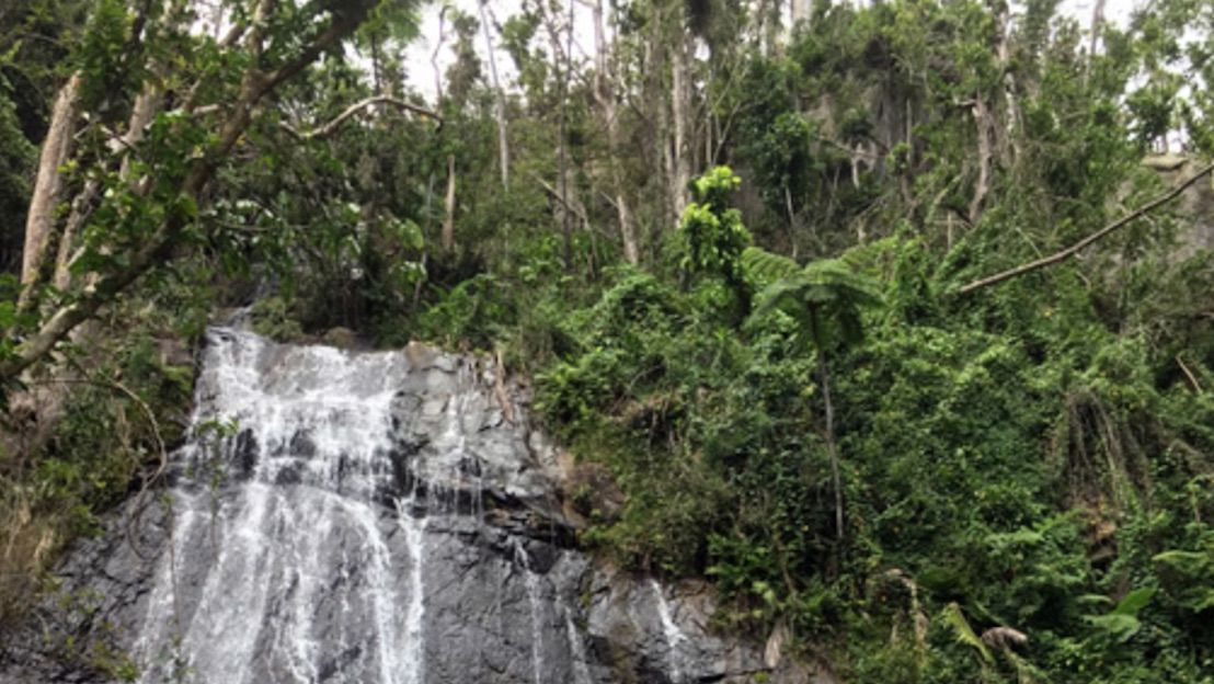Waterfall in El Yunque National Forest