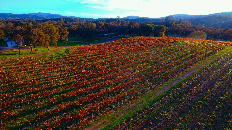 Casto Oaks Winery