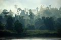 The rainforest in Borneo