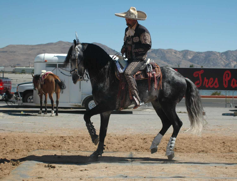 Dancing horses at the Cinco de Mayo Festival in Reno, Nevada, NV.